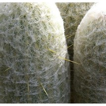 20 Seeds Peruvian Old Man Cactus Seeds Espostoa Laticornua Seed - $17.43