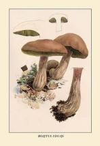 Boletus Edulis by W. Hamilton Gibson - Art Print - $19.99+