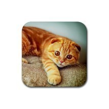 Orange scottish fold cat lying on sofa kitty kitten rubber coaster  square  thumb200