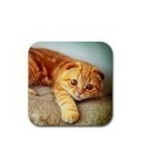 Cute Sweet Cat Kitty Kitten Pet Animal (Square) Rubber Coaster - $2.51 CAD