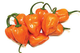 Hot Habanero Pepper Seeds 3 Variety #IMA34 - $15.99+
