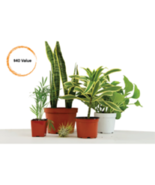 4 Assorted Plants; Party Favors, Gifts, Plant Gardens etc. FREE SHIPPING - $19.79