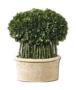 Uttermost Preserved Boxwood Willow Topiary 9 x 15 x 17 - €168,22 EUR