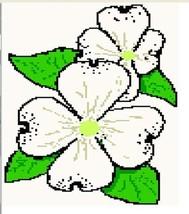 7flowers dogwood thumb200