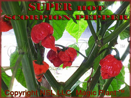 Scorpion Pepper - Dried Trinidad Scorpion Peppers - High Quality (5 sizes) - $15.79+