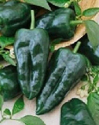 Primary image for Ancho Grande Hot Pepper Seeds 200 Pcs an