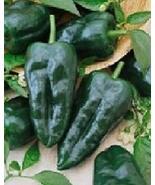 Ancho Grande Hot Pepper Seeds 200 Pcs an - $20.78