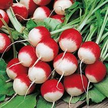50+ pk Sparkler White Tip Radish Seed, Home garden, Sprouting Seeds - $6.74