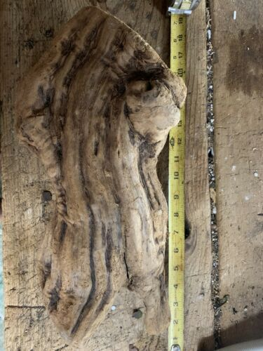 Cool Orchid Mount Extra Large Gnarly Grapewood (a)