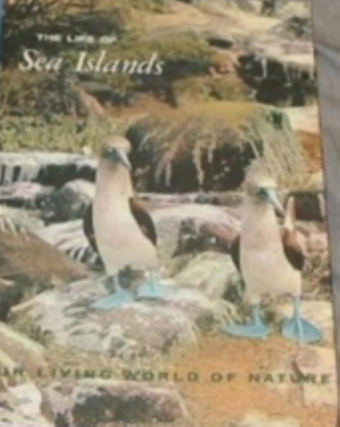 The life of Sea Islands (Our living world of nature)