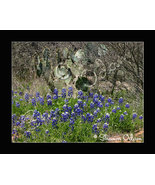 Texas Bluebonnets and Prickly Pear Fine Art Print - $17.50
