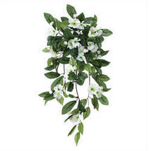 Impatiens Hanging Stem by OakRidge™ Outdoor-White - $16.99