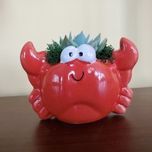"Ceramic Crab Planter with Succulent, live plant, 4"" red pot image 7"