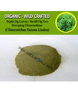 POWDER Sabah Snake Grass Lindau Leaves Drooping Clinacanthus Nutans Lindau - $16.40+