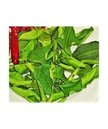 Dried Lime Leaves 1 oz. Organic Naturally Grown - $5.90