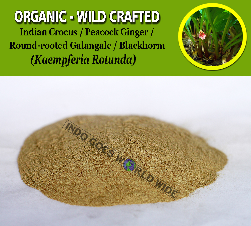 POWDER India Resurrection Lily Ciok Yek San Nai Kaempferia Angustifolia Organic
