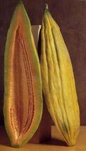 Banana Cantaloupe, Long Melon Heirloom Non-GMO Garden Fruit Vegetable Seeds - $8.39