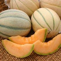 150 Organic Honey Rock Melon Seeds Cantaloupe Heirloom Combined Shipping - $1.79