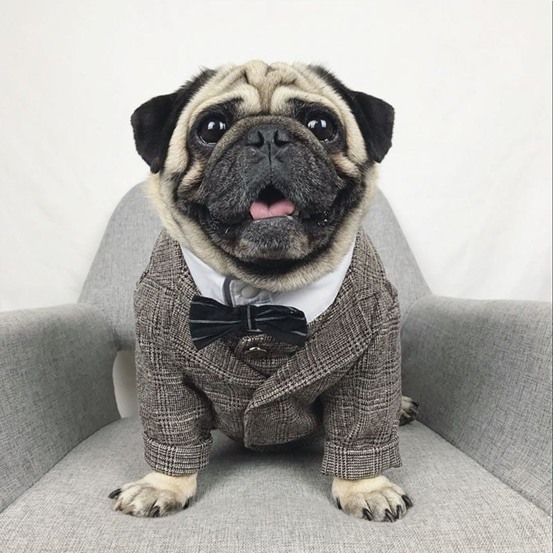 Formal dog clothes wedding pet dog suit pets dogs clothing for dogs pets supplies xs xxl