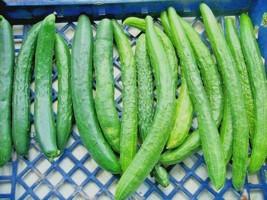40+JAPANESE LONG PICKLING CUCUMBERS Seeds Mild Crisp Organic Garden/Cont... - $2.50
