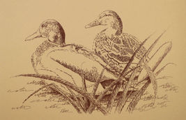 Duck Art Print #20 by Stephen Kline DRAWING FROM WORDS Great Gift MALLAR... - $49.95