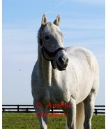 COLOR PHOTO - 8x10 Holy Bull  at Jonabell Farm - 1994 Horse of The Year - $10.00+