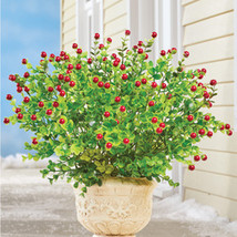 Winter Boxwood with Red Berries Bush Arrangement - $26.16