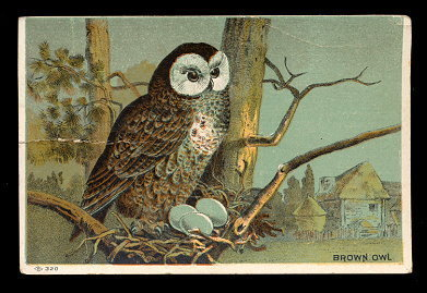 "Primary image for 1891 Brown Owl ""Farmer's Friend"" Victorian Trade Card"