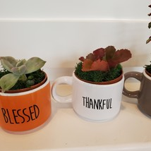 Succulents in Espresso Mug Planters, Set of 3, ceramic Thankful Grateful Blessed image 4