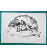 ANIMALS Lion & Dead Horse - 1876 Antique Print - $16.20