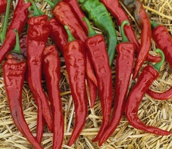 Cayenne Hot Chili Peppers Heirloom Non-GMO Pepper Garden Vegetable 30 Seeds - $8.39