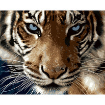 Paint By Numbers Kit Realistic Tiger 40CMx50CM Canvas - $14.36