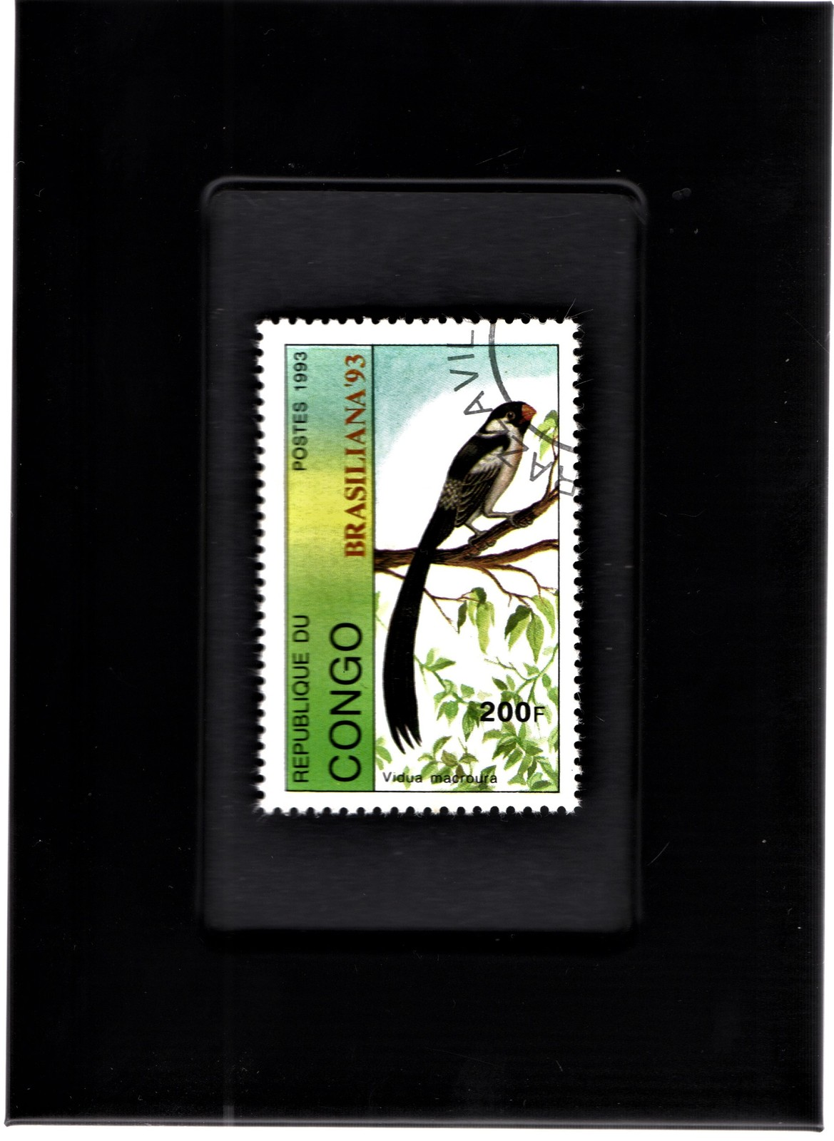 Primary image for Tchotchke Framed Stamp Art Collectable Postage Stamp- Pin-Tailed Whydah