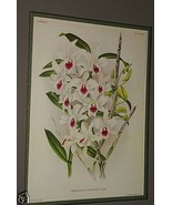 Lindenia Print Limited Edition Dendrobium Ainsworthi Orchid Collectible ... - $15.19