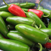 Jalapeno pepper hot chilli jalapeño mild picante chile vegetable seed 50... - $20.00