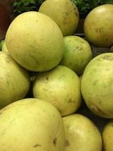 live plant fruit 2'' to 5'' toronja trees, Grapefruit tree - Outdoor Living - $65.99