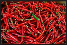 SHIP FROM US Pepper, Cayenne Long Red Chili Heirloom Non-GMO Seeds SPT5 - $6.00