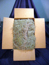 Spanish Moss Large approx. 28 lbs  - $94.00