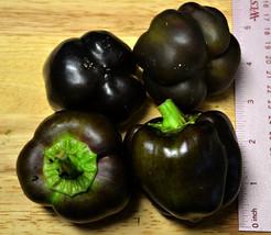 Organic Heirloom RARE 5 Black Deep Purple Pepper Seeds Bell Sweet Pepper  - $10.11
