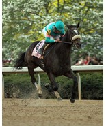 Zenyatta  16 starts  with 16 Wins  - $20.00