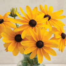 Indian Summer Rudbeckia Flower Seeds - $8.99