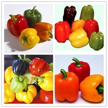 Sweet Bell Mix Sweet Pepper Seeds - (10 different varieties). - $2.84+