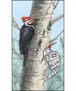 Woodpecker cross stitch chart Sue Coleman The Stitching Studio  - $14.40