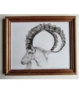 Ibex,Wild Goat, Framed Wildlife Art Print,Pen and Ink, Animal Art Print,... - $32.00