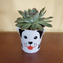 """Echeveria Succulent in Tin Bucket with Dog Face, 4"""" live plant in animal planter image 1"""