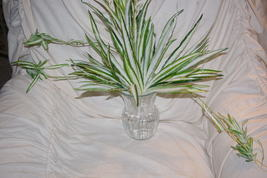 Home Interior Spider Bush With Trailers Homco 40057 - $20.00