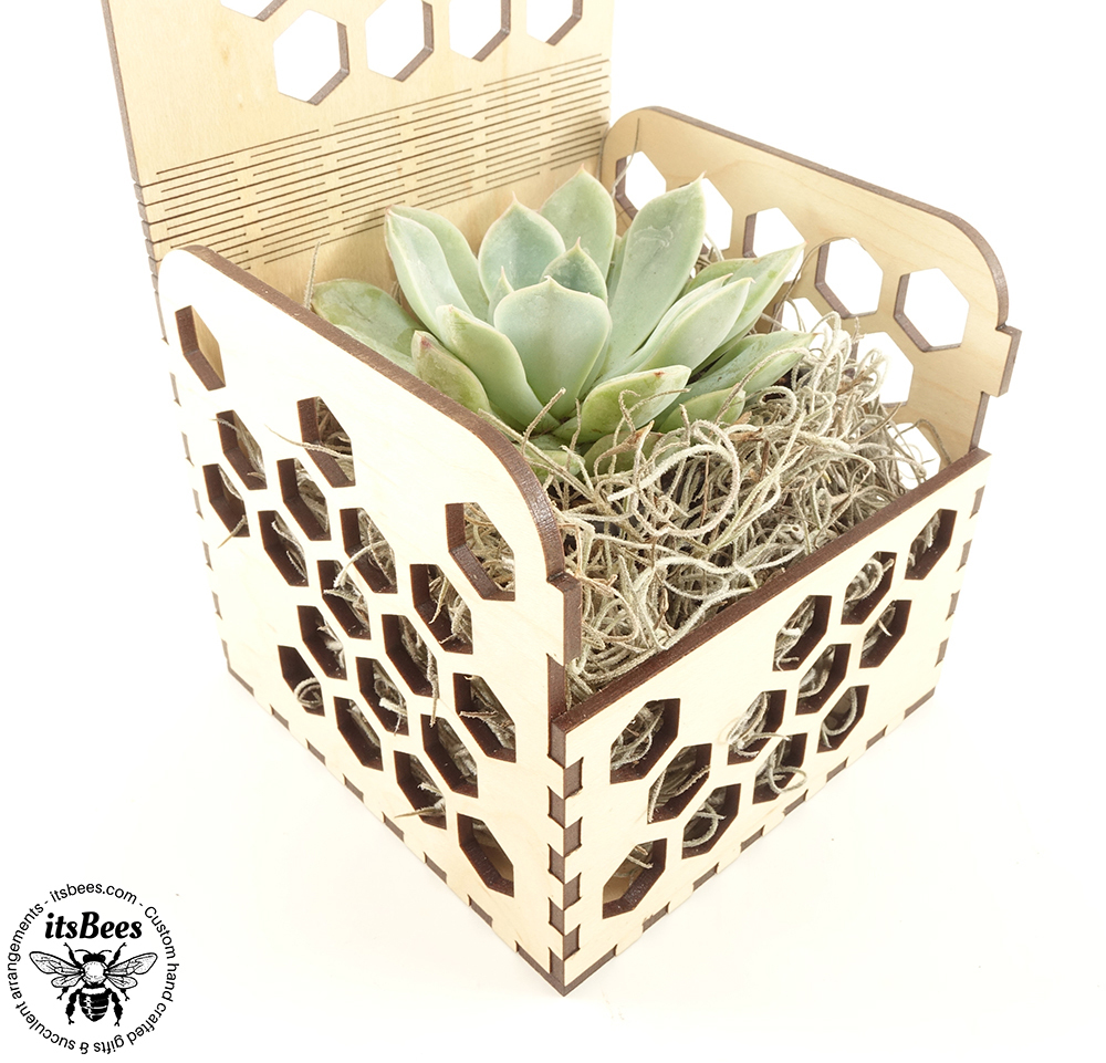 Personalized Succulent Honey Comb Custom Gift Box - Laser Cut and Engraved Wood