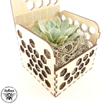 Personalized Succulent Honey Comb Custom Gift Box - Laser Cut and Engrav... - $20.00