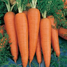 Carrot Seeds - Danvers 126 - Outdoor Living - Gardening - FREE SHIPPING - $28.99+