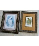 2 Antique Framed Bird lithographs 1st Edition Bee Eater Cassell 1869 + C... - $284.99